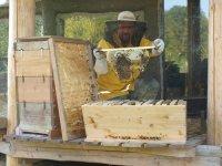 Bernhard Gruber hält seine Bienen in einer Oberträgerbeute