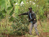 Aloyce Massawe in seinem Waldgarten
